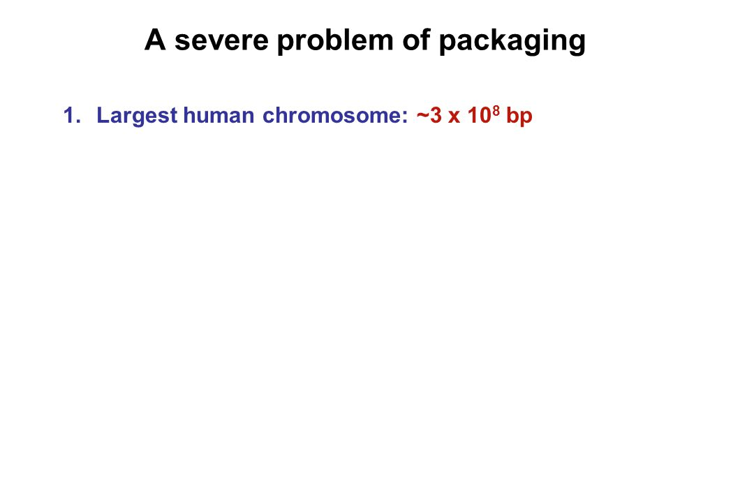 A severe problem of packaging 1.Largest human chromosome: ~3 x 10 8 bp How long is it?
