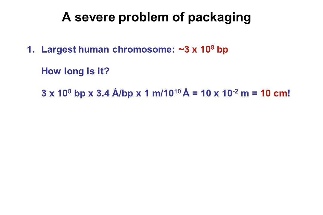A severe problem of packaging 1.Largest human chromosome: ~3 x 10 8 bp How long is it.