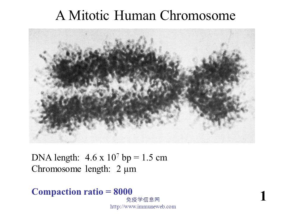 免疫学信息网 http://www.immuneweb.com Domain Structure of Histones 11 22 33 L1L2NC Core Domain 8