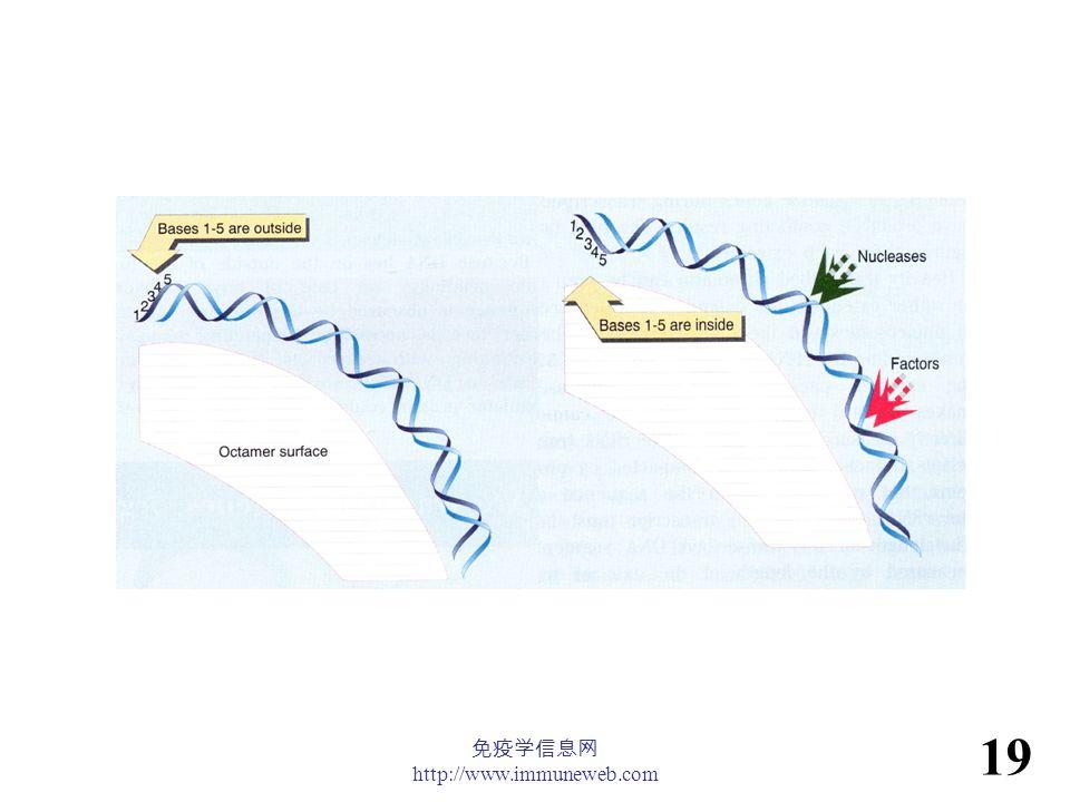 免疫学信息网 http://www.immuneweb.com 19