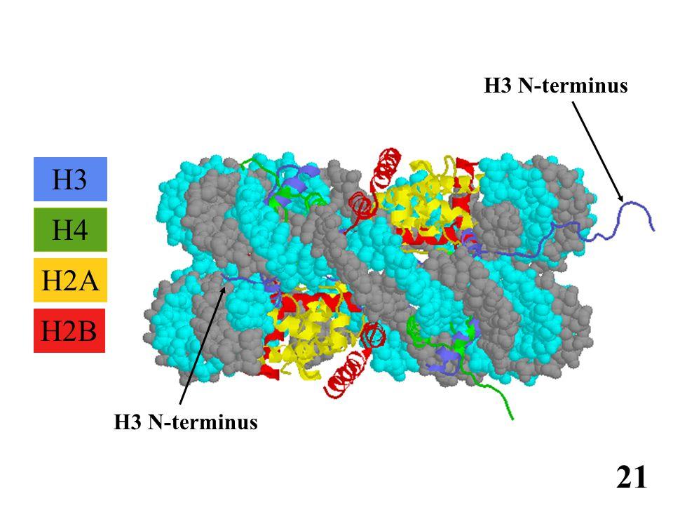 免疫学信息网 http://www.immuneweb.com H4 H2B H2A H3 H3 N-terminus 21