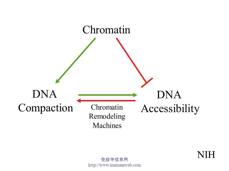 免疫学信息网 http://www.immuneweb.com Basic Unit of Chromatin Structure: Polynucleosome 2 Compaction ratio = 6