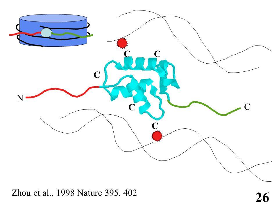 免疫学信息网 http://www.immuneweb.com N C C C C C C 26 Zhou et al., 1998 Nature 395, 402