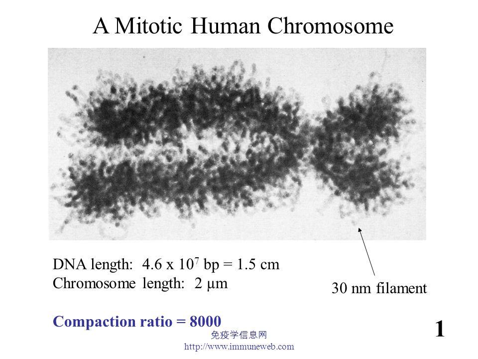 免疫学信息网 http://www.immuneweb.com Nuclear Scaffold/Matrix DNA Loops (5-200 kb) SAR/MAR 6