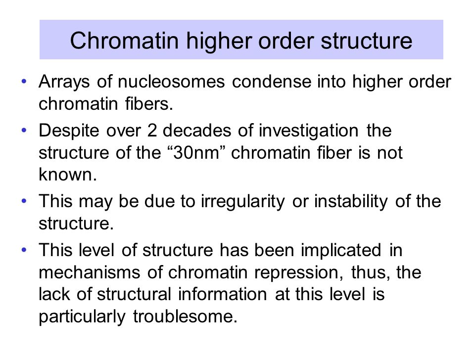 Chromatin higher order structure Arrays of nucleosomes condense into higher order chromatin fibers.
