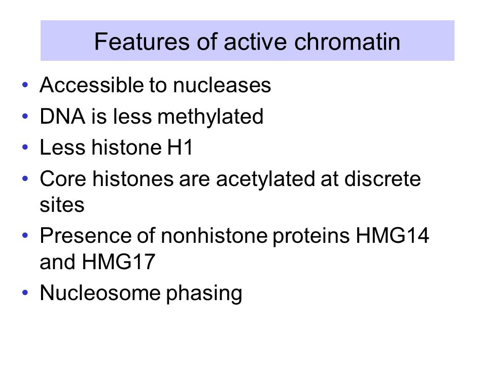 Features of active chromatin Accessible to nucleases DNA is less methylated Less histone H1 Core histones are acetylated at discrete sites Presence of nonhistone proteins HMG14 and HMG17 Nucleosome phasing