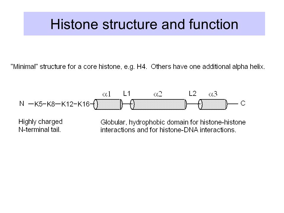 Histone structure and function