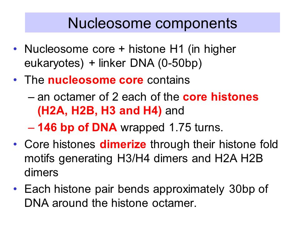 Nucleosome components Nucleosome core + histone H1 (in higher eukaryotes) + linker DNA (0-50bp) The nucleosome core contains –an octamer of 2 each of the core histones (H2A, H2B, H3 and H4) and –146 bp of DNA wrapped 1.75 turns.