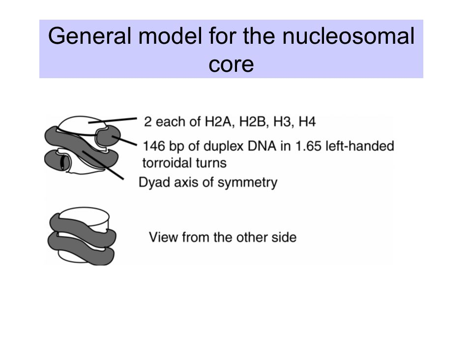 General model for the nucleosomal core