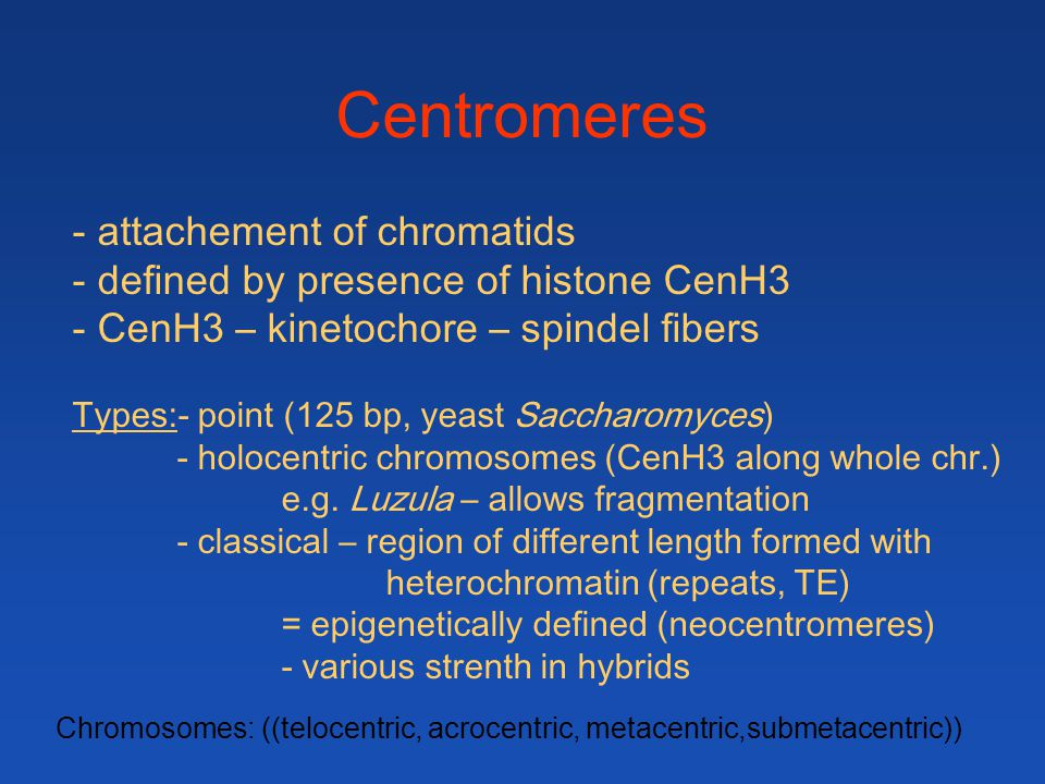 - attachement of chromatids - defined by presence of histone CenH3 - CenH3 – kinetochore – spindel fibers Types:- point (125 bp, yeast Saccharomyces)