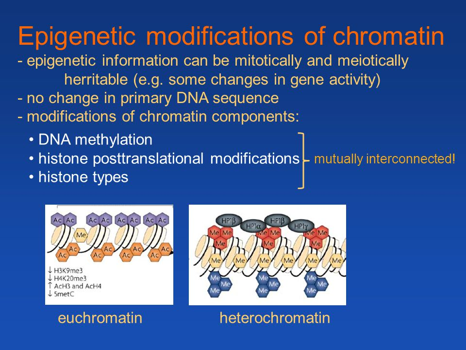 DNA methylation histone posttranslational modifications mutually interconnected! histone types Epigenetic modifications of chromatin - epigenetic info