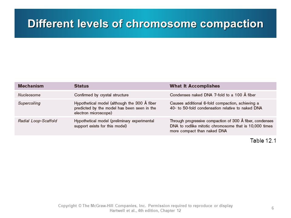 Different levels of chromosome compaction Copyright © The McGraw-Hill Companies, Inc.