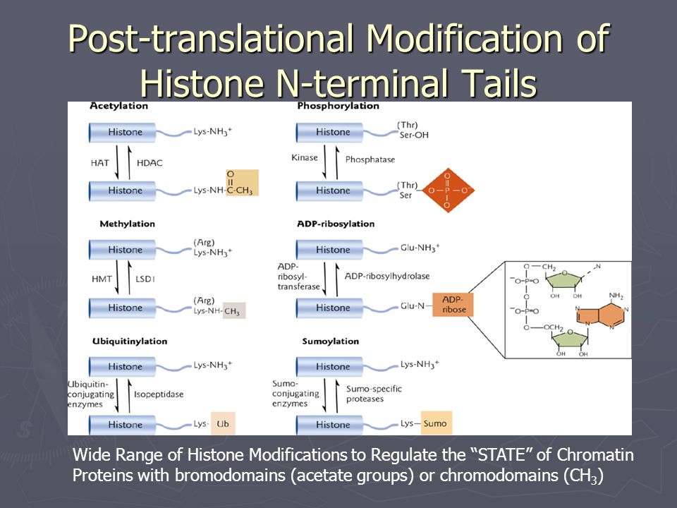 Post-translational Modification of Histone N-terminal Tails Wide Range of Histone Modifications to Regulate the STATE of Chromatin Proteins with bromodomains (acetate groups) or chromodomains (CH 3 )