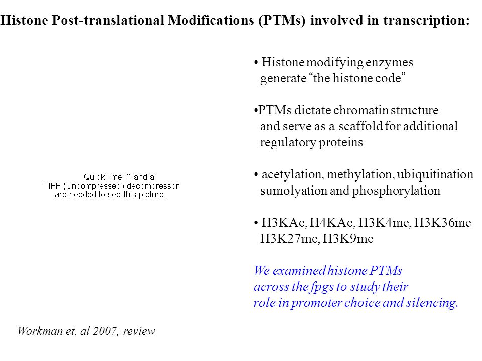 Histone Post-translational Modifications (PTMs) involved in transcription: Histone modifying enzymes generate the histone code PTMs dictate chromatin structure and serve as a scaffold for additional regulatory proteins acetylation, methylation, ubiquitination sumolyation and phosphorylation H3KAc, H4KAc, H3K4me, H3K36me H3K27me, H3K9me We examined histone PTMs across the fpgs to study their role in promoter choice and silencing.