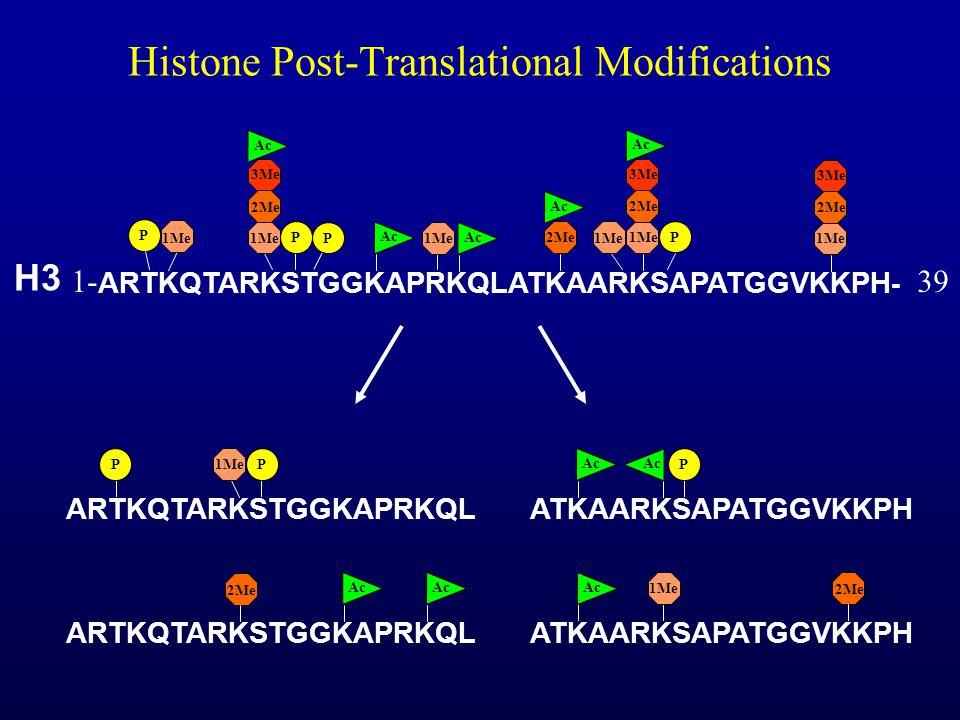 Histone Post-Translational Modifications ATKAARKSAPATGGVKKPH Ac P ATKAARKSAPATGGVKKPH Ac 1Me 2Me ARTKQTARKSTGGKAPRKQL Ac 2Me ARTKQTARKSTGGKAPRKQL PP 1Me ARTKQTARKSTGGKAPRKQLATKAARKSAPATGGVKKPH - 1Me 3Me 2Me Ac 1Me P P P 2Me Ac 1Me 3Me 2Me Ac P 1Me 3Me 2Me Ac H3 1-39