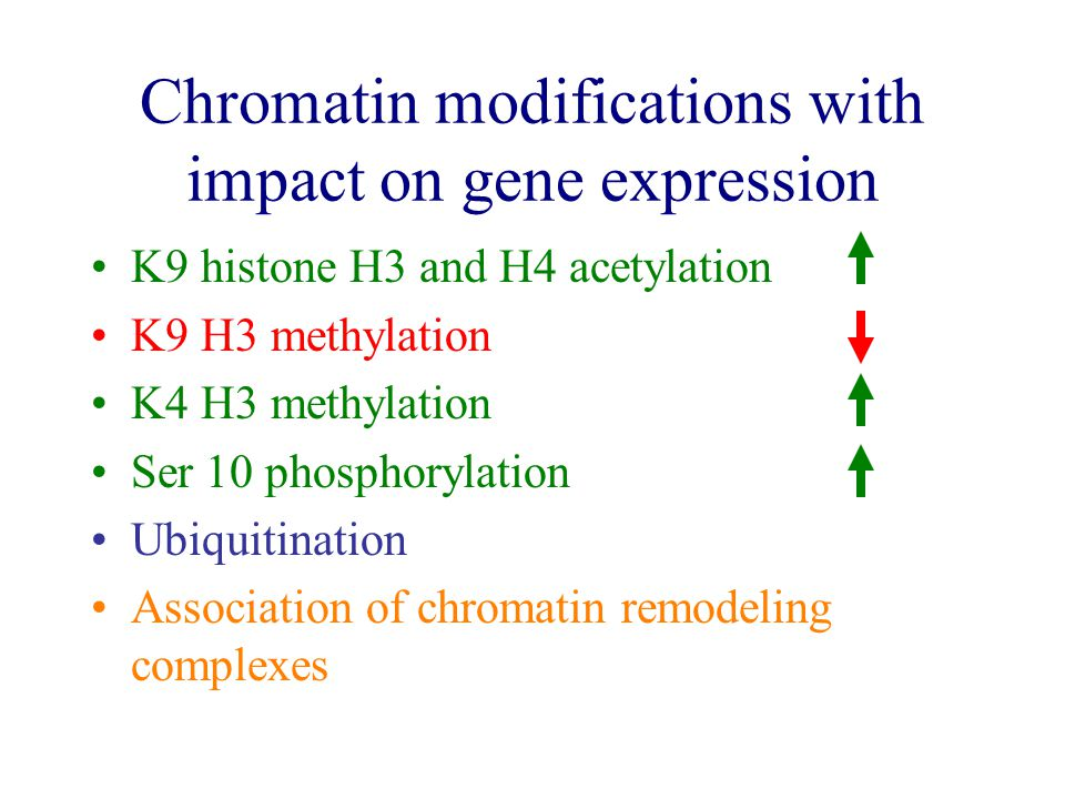 Chromatin modifications with impact on gene expression K9 histone H3 and H4 acetylation K9 H3 methylation K4 H3 methylation Ser 10 phosphorylation Ubiquitination Association of chromatin remodeling complexes