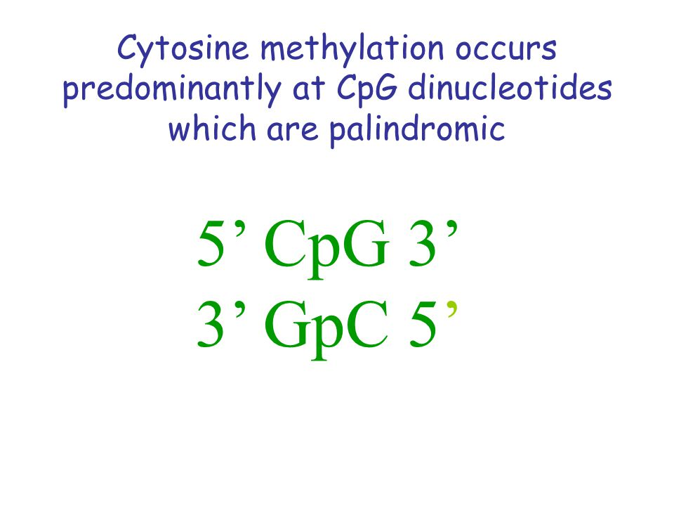 Cytosine methylation occurs predominantly at CpG dinucleotides which are palindromic 5' CpG 3' 3' GpC 5'