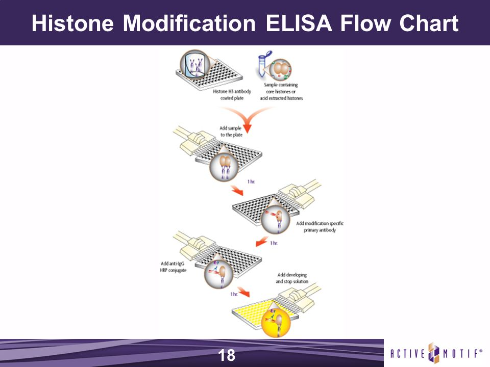 Histone Modification ELISA Flow Chart 18