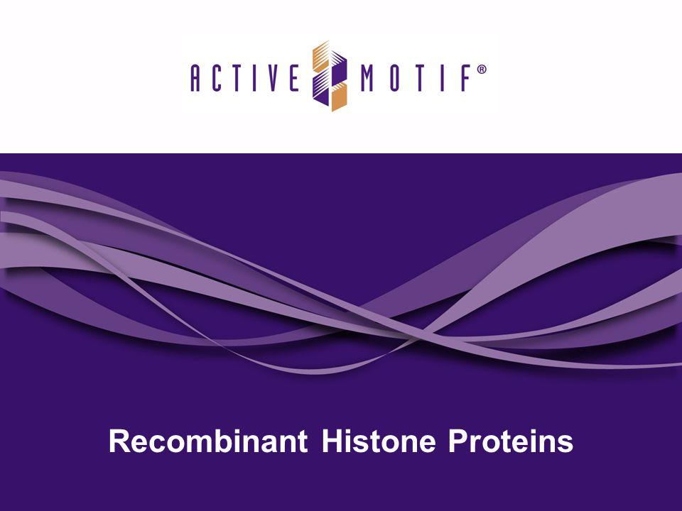 Recombinant Histone Proteins