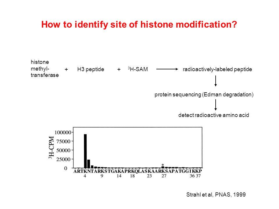 histone methyl- transferase H3 peptide 3 H-SAMradioactively-labeled peptide + + protein sequencing (Edman degradation) Strahl et al, PNAS, 1999 detect