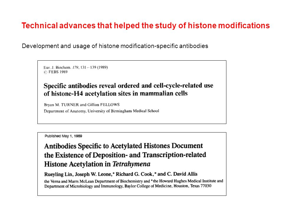 Development and usage of histone modification-specific antibodies Technical advances that helped the study of histone modifications