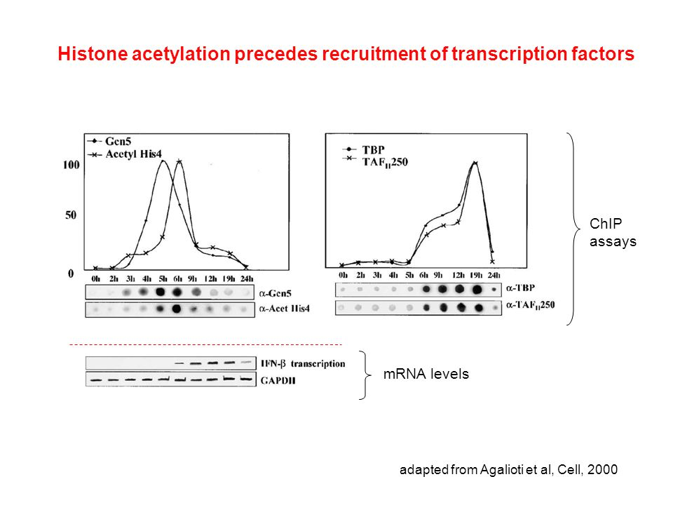 Histone acetylation precedes recruitment of transcription factors adapted from Agalioti et al, Cell, 2000 mRNA levels ChIP assays