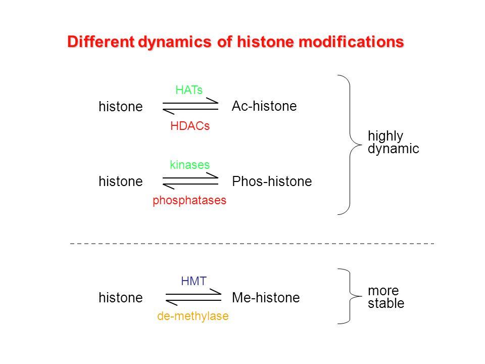 Different dynamics of histone modifications histone Ac-histone HATs HDACs histone Phos-histone kinases phosphatases histone Me-histone HMT de-methylas