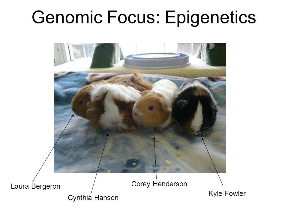Genomic Focus: Epigenetics Laura Bergeron Corey Henderson Cynthia Hansen Kyle Fowler