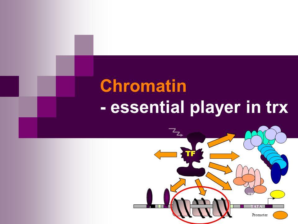 Chromatin - essential player in trx TATA Promoter TBP TF