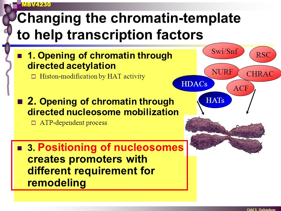 MBV4230 Odd S. Gabrielsen Changing the chromatin-template to help transcription factors 1. Opening of chromatin through directed acetylation  Histon-