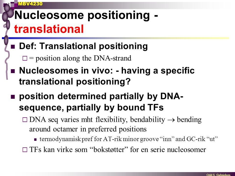 MBV4230 Odd S. Gabrielsen Nucleosome positioning - translational Def: Translational positioning  = position along the DNA-strand Nucleosomes in vivo: