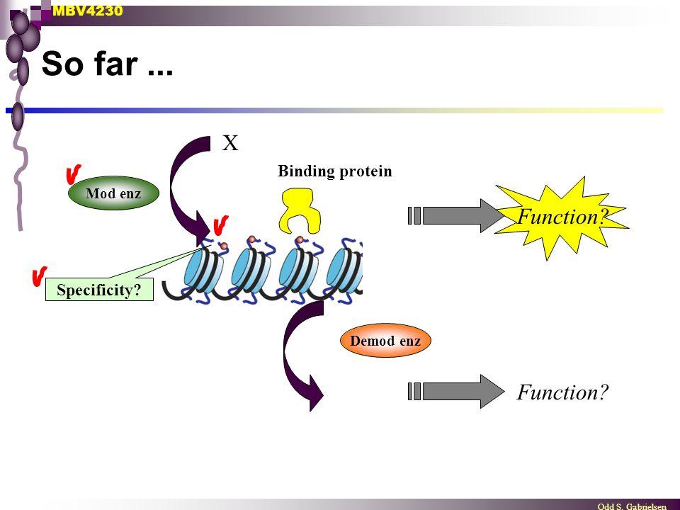 MBV4230 Odd S. Gabrielsen So far... Mod enz Demod enz Binding protein Function? X Specificity?