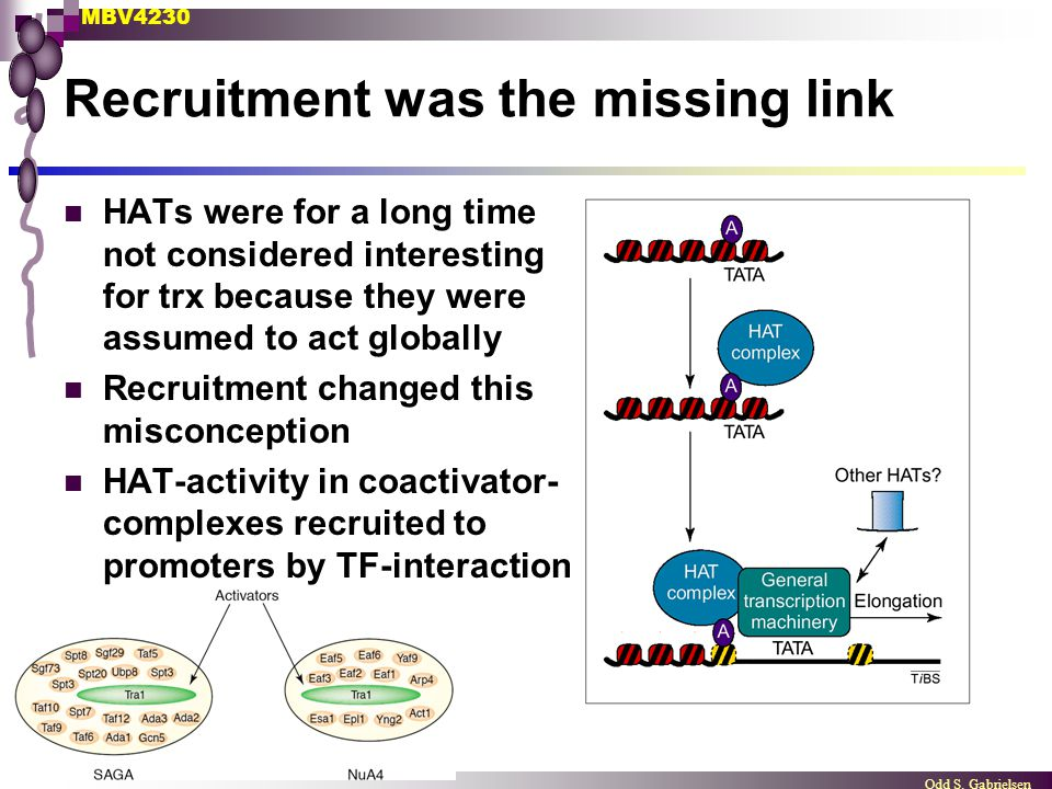 MBV4230 Odd S. Gabrielsen Recruitment was the missing link HATs were for a long time not considered interesting for trx because they were assumed to a