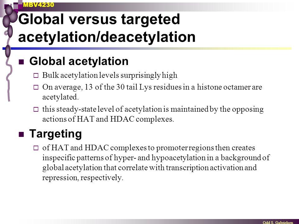 MBV4230 Odd S. Gabrielsen Global versus targeted acetylation/deacetylation Global acetylation  Bulk acetylation levels surprisingly high  On average