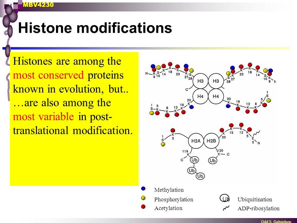 MBV4230 Odd S. Gabrielsen Histone modifications Methylation UbiquitinationPhosphorylation Acetylation ADP-ribosylation Ub Histones are among the most