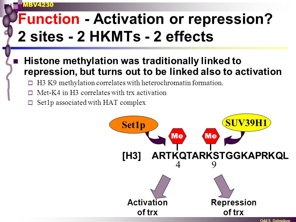 MBV4230 Odd S. Gabrielsen Function - Activation or repression? 2 sites - 2 HKMTs - 2 effects [H3] ARTKQTARKSTGGKAPRKQL Me 49 Set1p SUV39H1 Activation