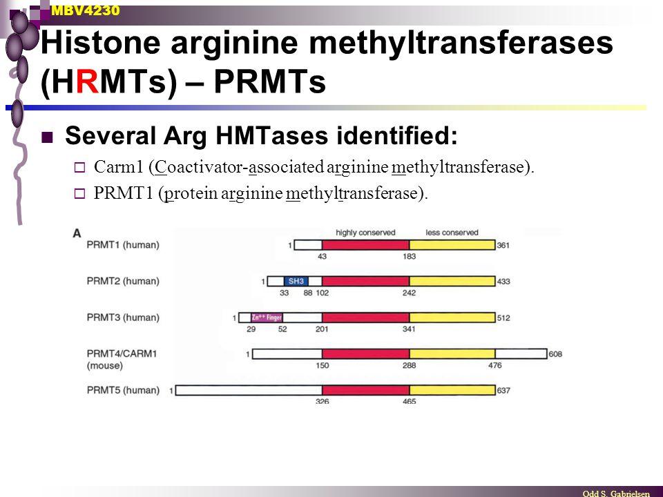 MBV4230 Odd S. Gabrielsen Histone arginine methyltransferases (HRMTs) – PRMTs Several Arg HMTases identified:  Carm1 (Coactivator-associated arginine