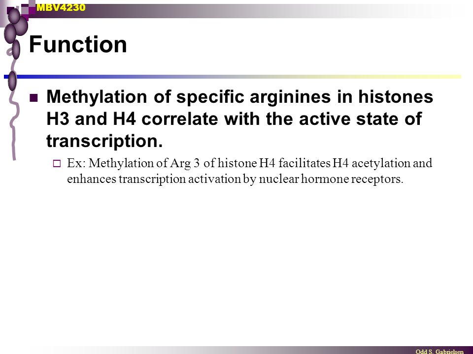 MBV4230 Odd S. Gabrielsen Function Methylation of specific arginines in histones H3 and H4 correlate with the active state of transcription.  Ex: Met