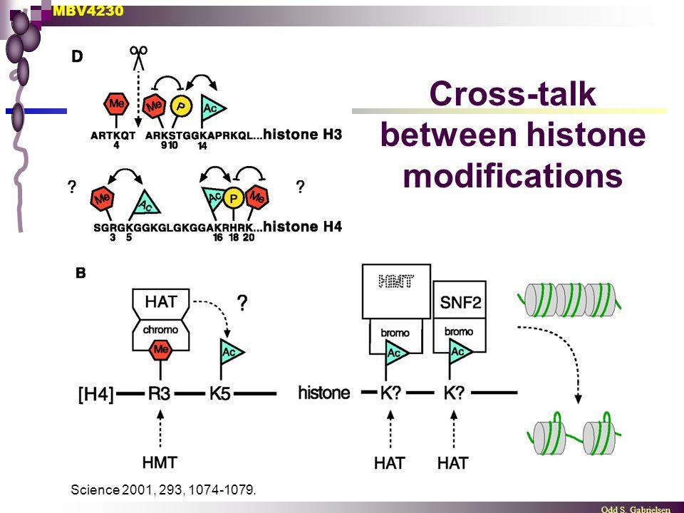 MBV4230 Odd S. Gabrielsen Science 2001, 293, 1074-1079. Cross-talk between histone modifications