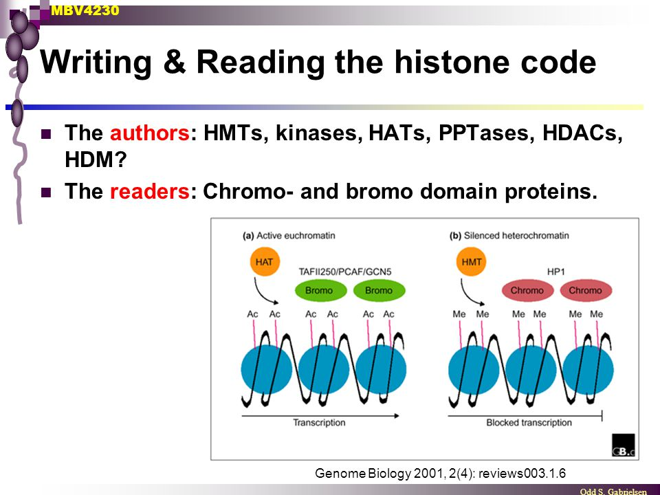 MBV4230 Odd S. Gabrielsen Genome Biology 2001, 2(4): reviews003.1.6 Writing & Reading the histone code The authors: HMTs, kinases, HATs, PPTases, HDAC