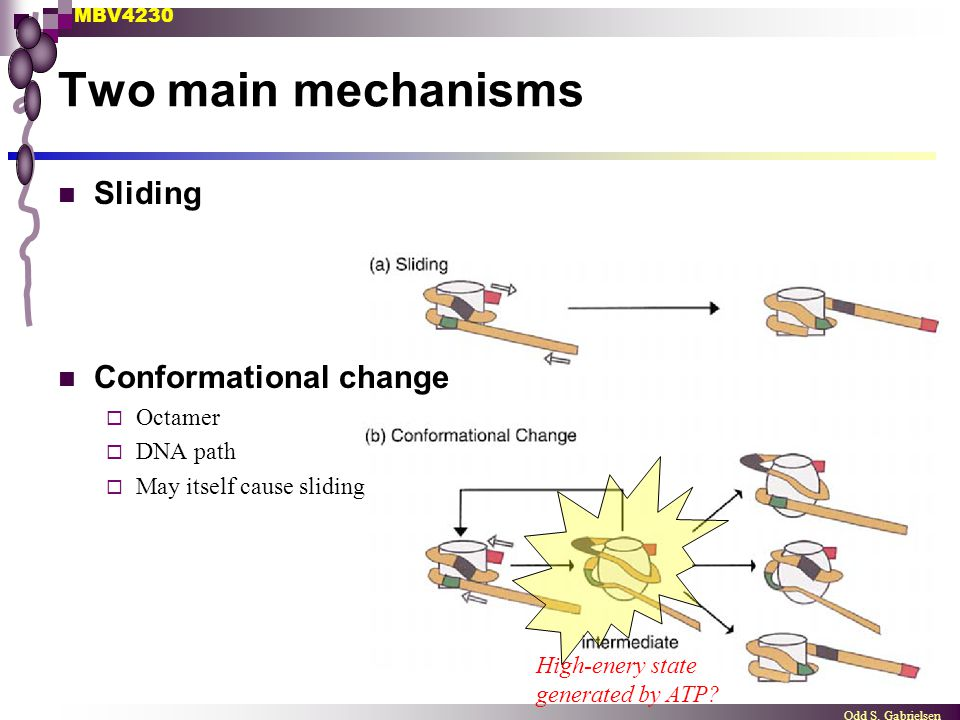 MBV4230 Odd S. Gabrielsen Two main mechanisms Sliding Conformational change  Octamer  DNA path  May itself cause sliding High-enery state generated