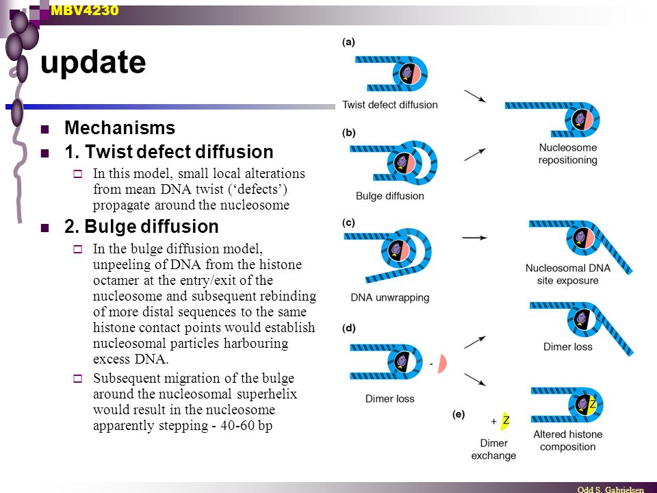 MBV4230 Odd S. Gabrielsen update Mechanisms 1. Twist defect diffusion  In this model, small local alterations from mean DNA twist ('defects') propaga