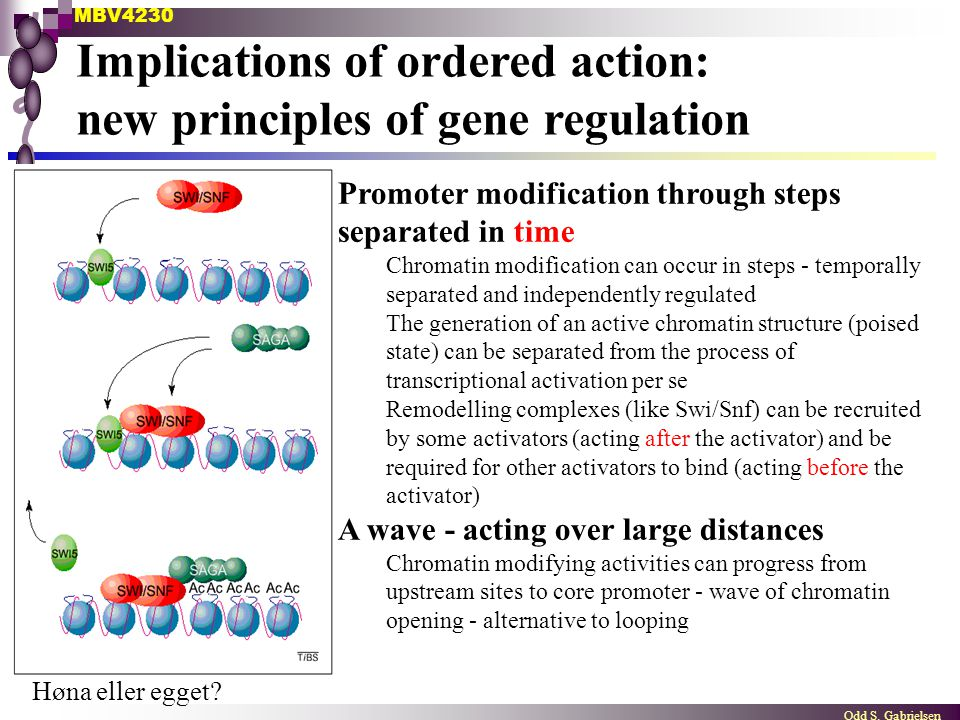 MBV4230 Odd S. Gabrielsen Implications of ordered action: new principles of gene regulation Promoter modification through steps separated in time Chro