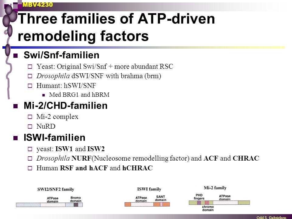 MBV4230 Odd S. Gabrielsen Three families of ATP-driven remodeling factors Swi/Snf-familien  Yeast: Original Swi/Snf + more abundant RSC  Drosophila