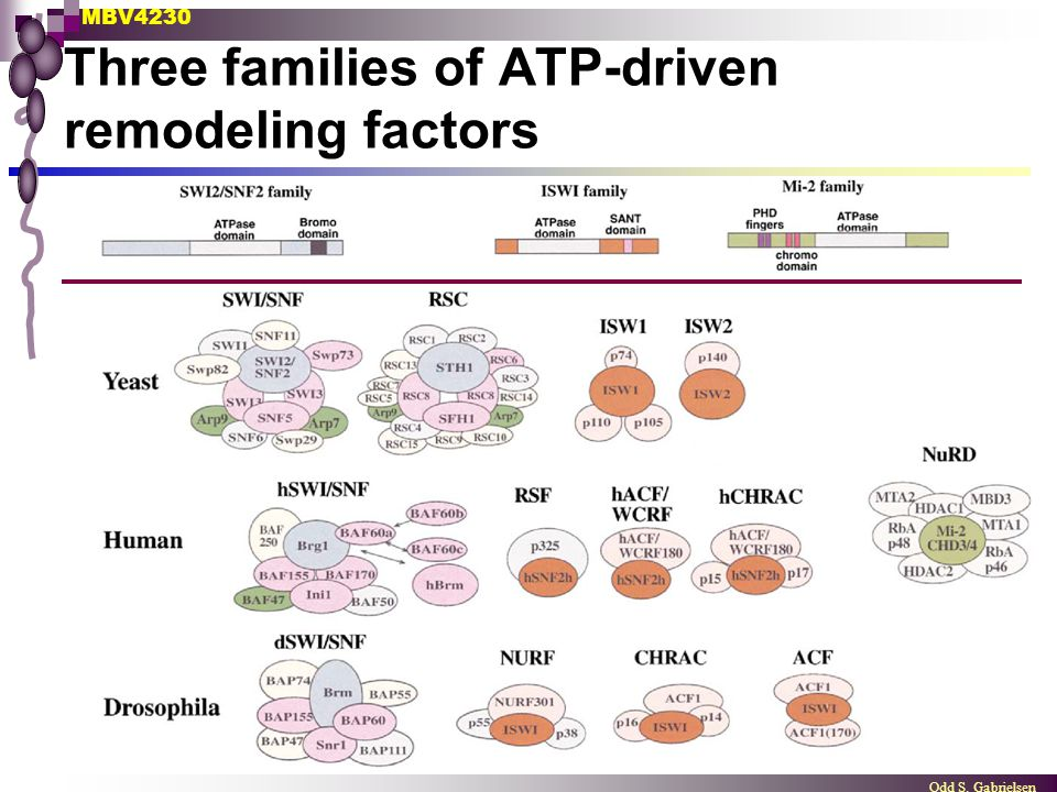 MBV4230 Odd S. Gabrielsen Three families of ATP-driven remodeling factors