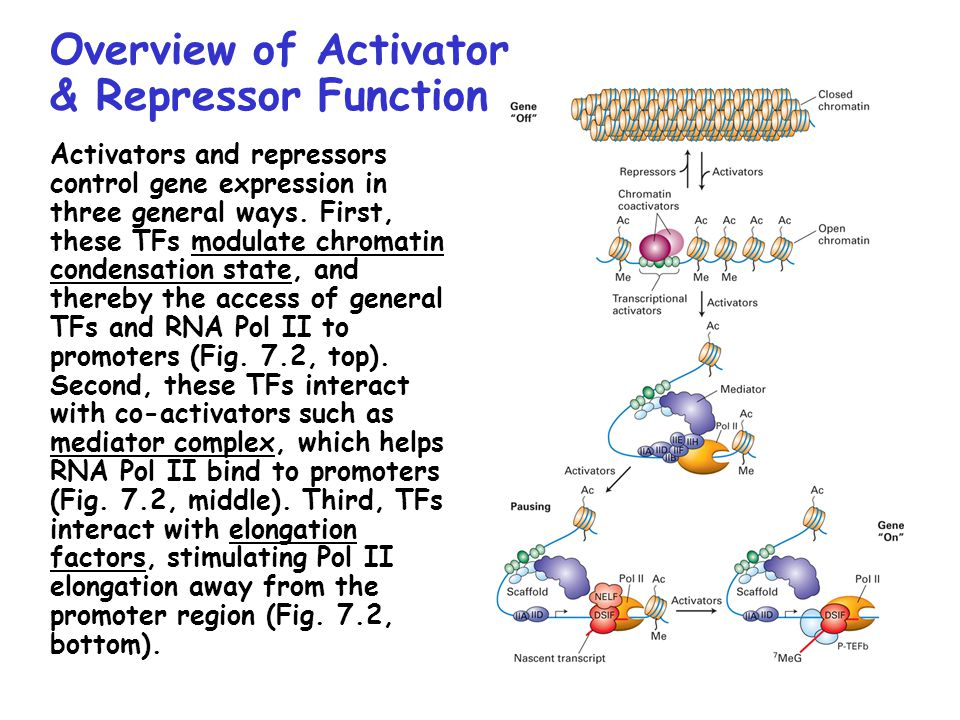Overview of Activator & Repressor Function Activators and repressors control gene expression in three general ways.