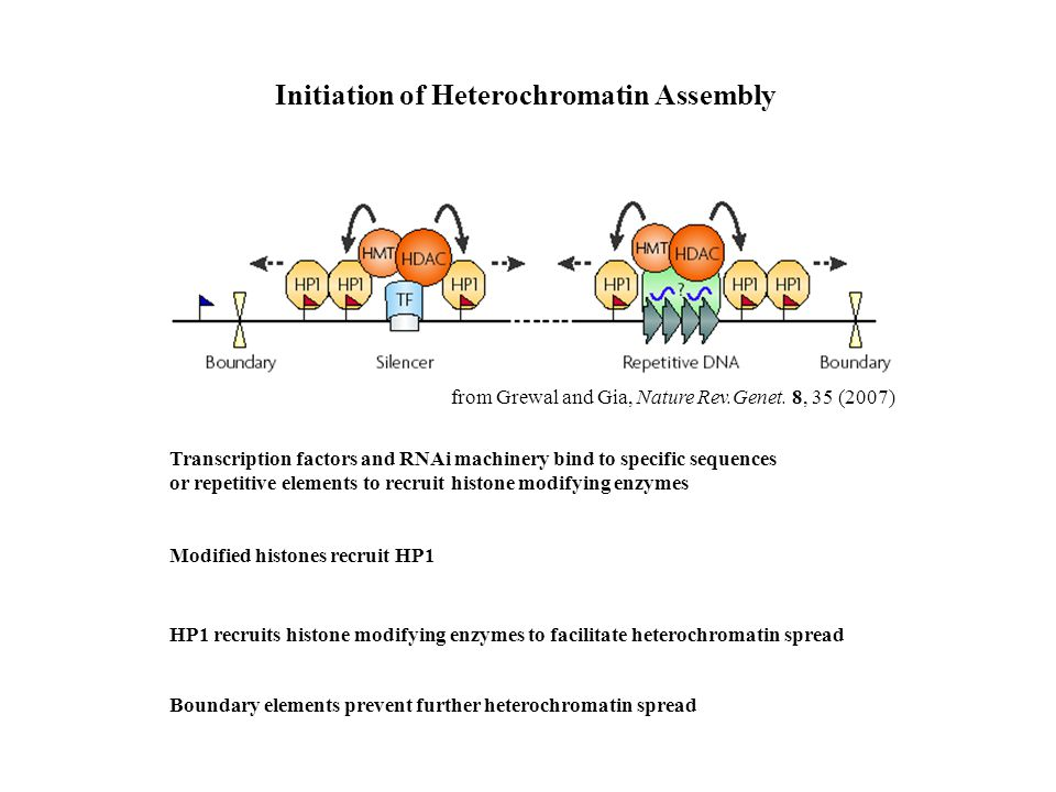 Initiation of Heterochromatin Assembly from Grewal and Gia, Nature Rev.Genet.