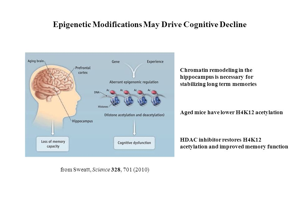 Epigenetic Modifications May Drive Cognitive Decline from Sweatt, Science 328, 701 (2010) Chromatin remodeling in the hippocampus is necessary for stabilizing long term memories Aged mice have lower H4K12 acetylation HDAC inhibitor restores H4K12 acetylation and improved memory function