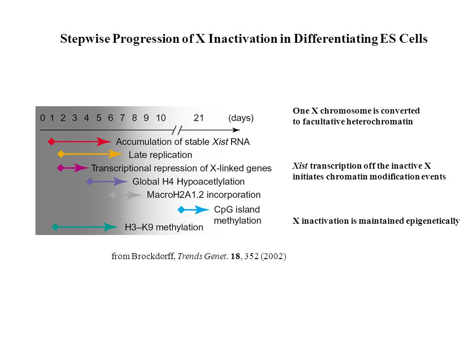 Stepwise Progression of X Inactivation in Differentiating ES Cells from Brockdorff, Trends Genet.