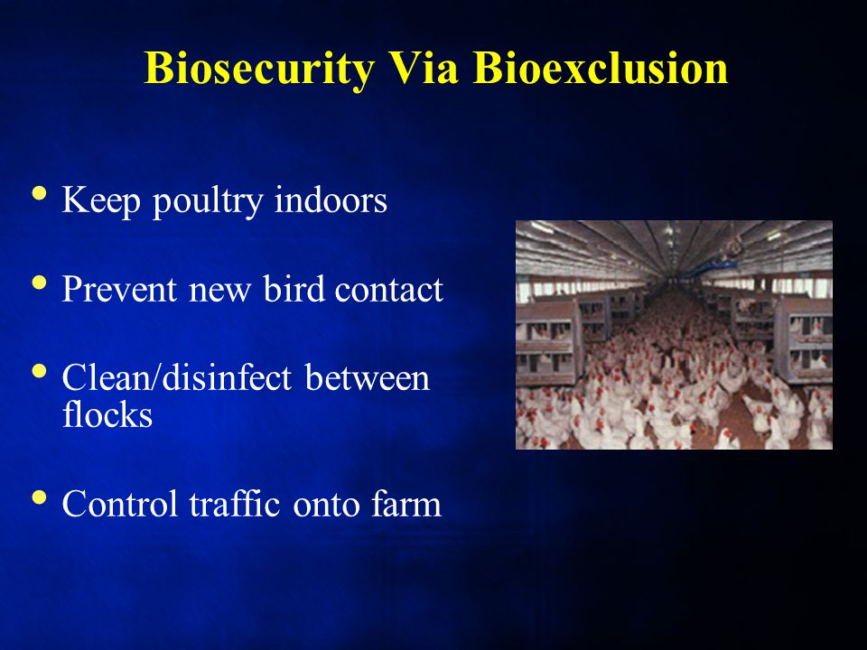Biosecurity Via Bioexclusion Keep poultry indoors Prevent new bird contact Clean/disinfect between flocks Control traffic onto farm